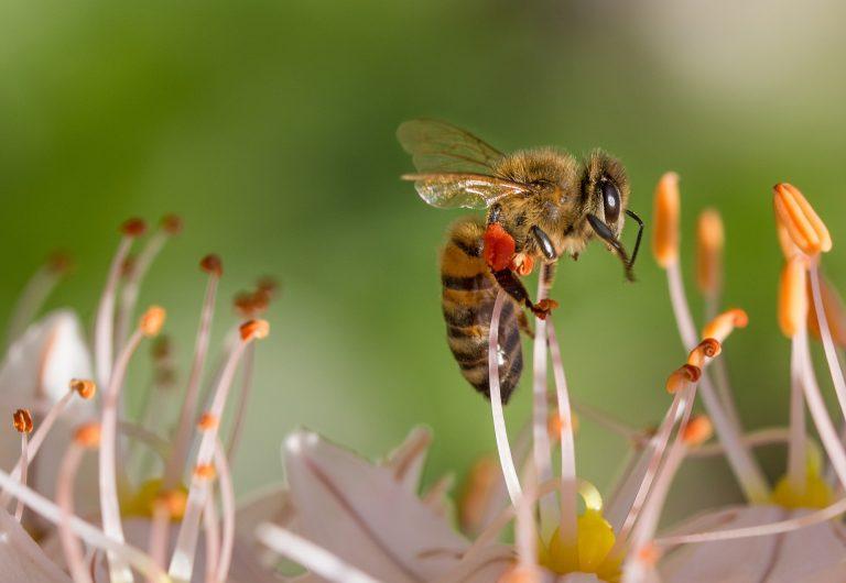 A méheket védő európai kampányban sikerült a magyar célkitűzéseket teljesíteni