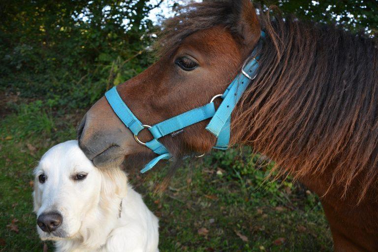 Kutyák miatt gázoltak halálra egy lovat