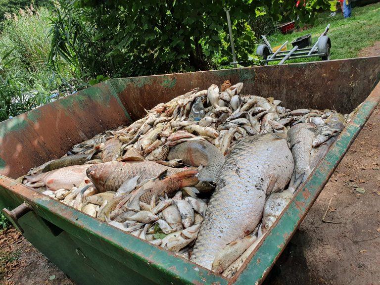 Baranya megyében is több tonna hal pusztult el