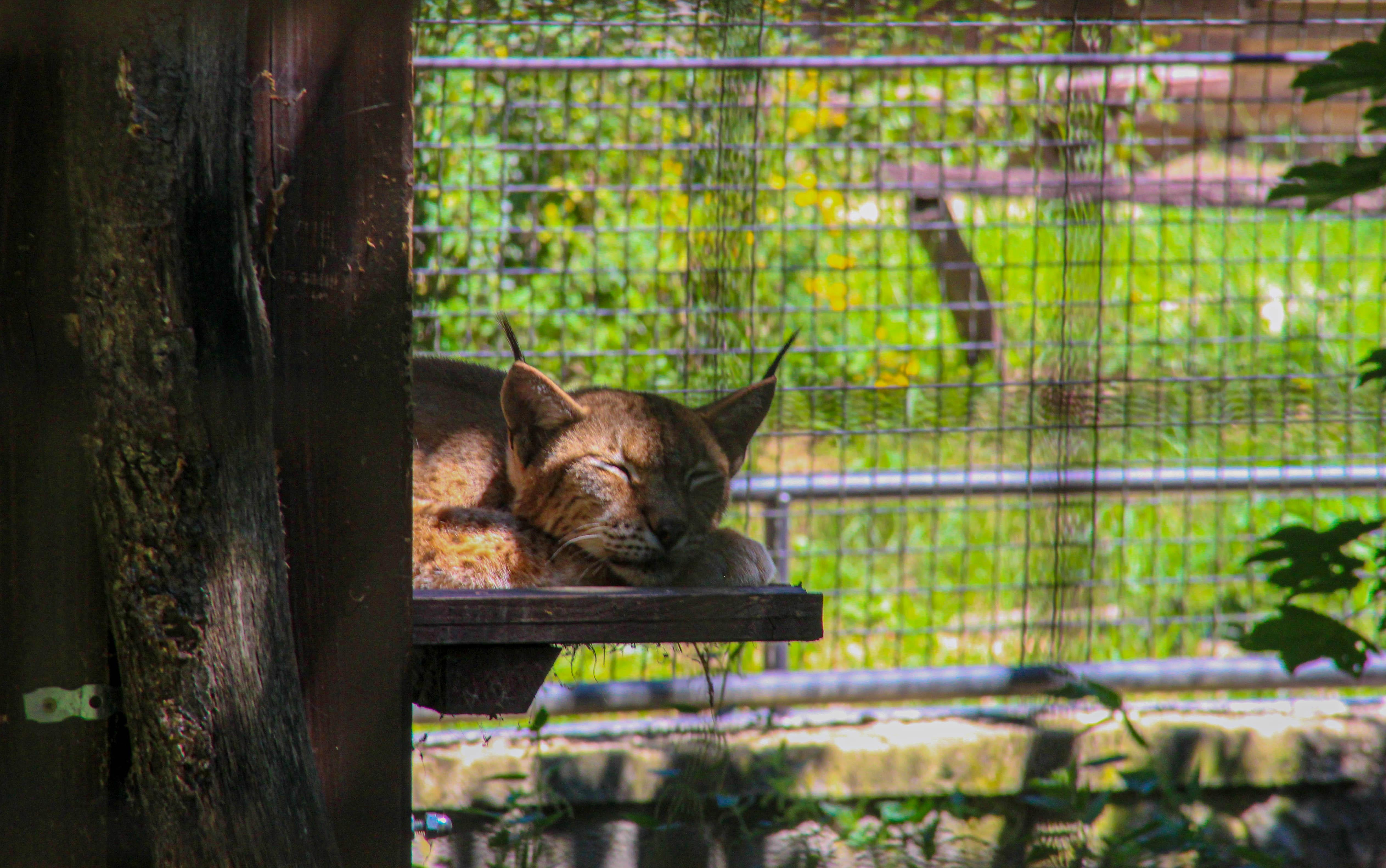 Ha már unod az állatkertet és friss levegőre vágysz, a Budakeszi Vadasparkot neked találták ki
